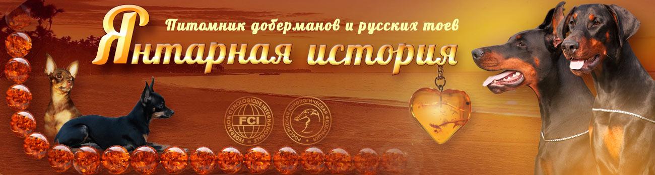 Питомник доберманов и русских тоев Янтарная История